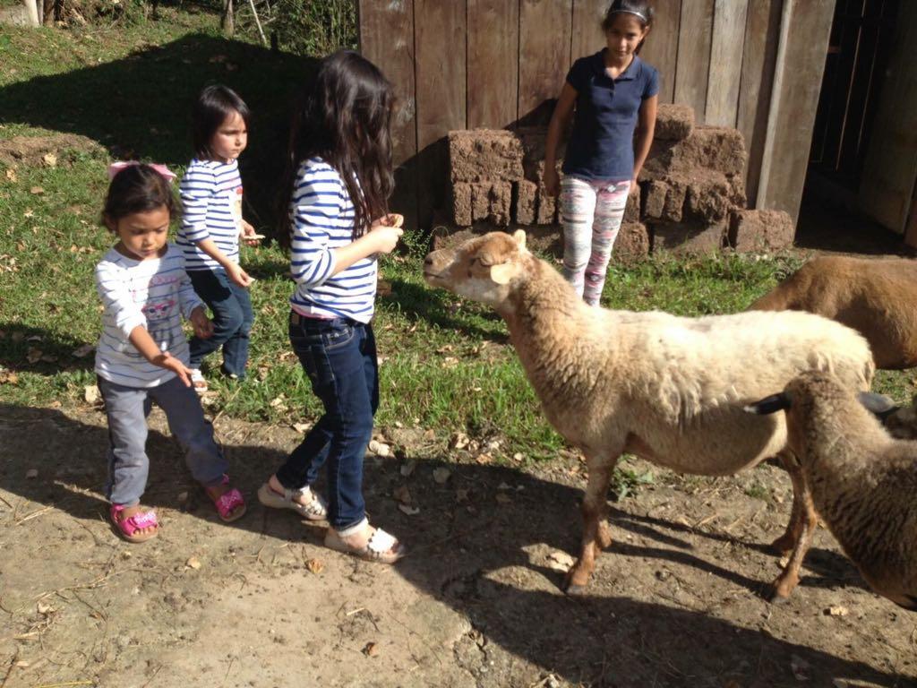 Children feeding farm animals