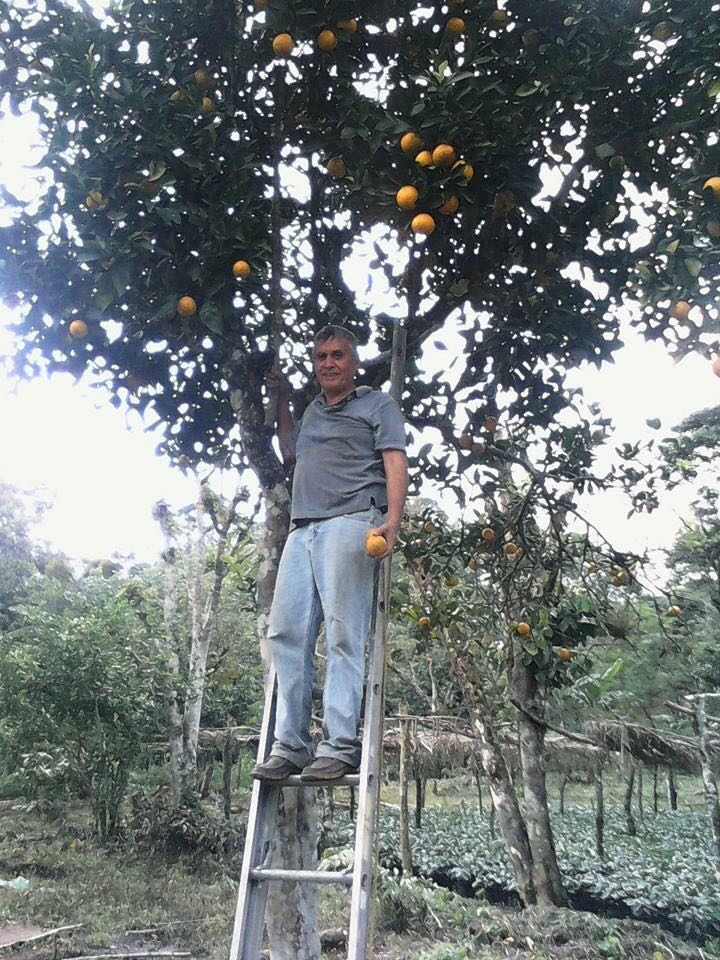 Man picking fruit