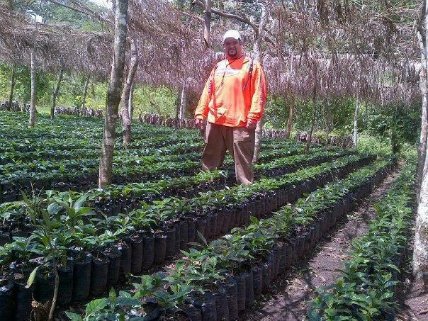 Farmer with coffee plants