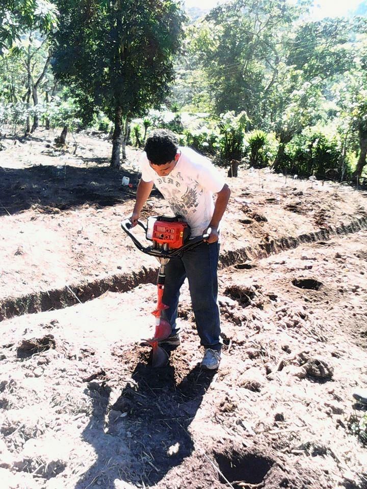 Farmer planting coffee